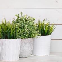 Benefícios de ter um jardim interno em casa e no trabalho