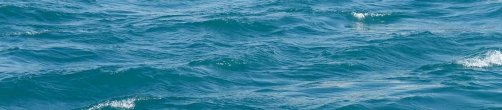 Você sabe como comemorar o dia mundial da água?